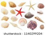 Assortment Of Seashells And...