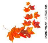 autumn maple leaves over white - stock photo
