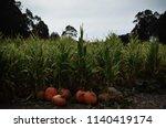Pumpkins By A Cornfield