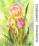 watercolor pink iris in the... | Shutterstock . vector #1140438521