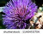 purple thistle flower in a... | Shutterstock . vector #1140453704
