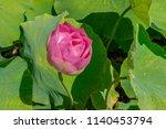 lotus flower in a botanical... | Shutterstock . vector #1140453794
