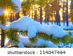 Pine Branch In Snow. Winter...