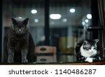 black cat with golden eyes... | Shutterstock . vector #1140486287