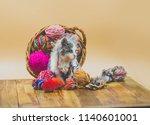 cute little kitten playing with ...   Shutterstock . vector #1140601001