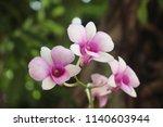macro of beautiful pink orchids ...   Shutterstock . vector #1140603944