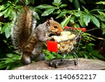 Grey Squirrel With A Shopping...