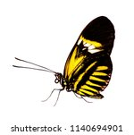 Stock photo the common postman butterfly heliconius melpomene with piano key pattern on black is isolated on 1140694901