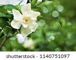 Pretty Gardenia Flower ...
