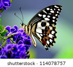 Stock photo butterfly on a flower 114078757
