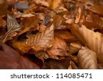 Beautifoul Fallen Autumn Brown...