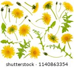 Many yellow dandelions and...