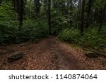 view of forest after rain in... | Shutterstock . vector #1140874064