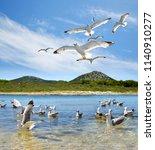 flock of seagull near the... | Shutterstock . vector #1140910277
