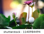the golf ball is in the lotus...   Shutterstock . vector #1140984494