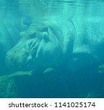 under water hippopotamus ...   Shutterstock . vector #1141025174