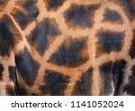 the giraffe skin  giraffa... | Shutterstock . vector #1141052024