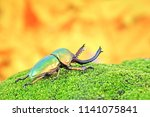 awesome pets   the exotic pets  ... | Shutterstock . vector #1141075841