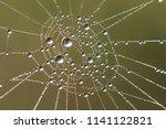 Dew Drop On Spider\'s Web