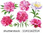 set of beautiful flowers ... | Shutterstock . vector #1141162514