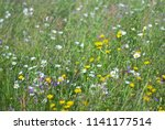 flowering meadow. wild meadow... | Shutterstock . vector #1141177514