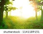 magic forest at sunrise ... | Shutterstock . vector #1141189151