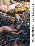 mushroom bol tus ed lis in the...   Shutterstock . vector #1141213271