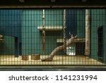 empty indoor cage in zoo. | Shutterstock . vector #1141231994