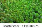 nice aquatic plant | Shutterstock . vector #1141300274