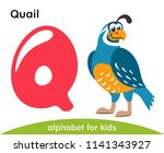 pink letter q and blue quail.... | Shutterstock .eps vector #1141343927