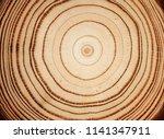 stump of tree felled   section...   Shutterstock . vector #1141347911