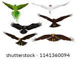 Flying Birds. Birds Landing....