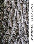 tree bark in maine | Shutterstock . vector #1141422971