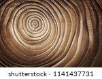 stump of tree felled   section...   Shutterstock . vector #1141437731