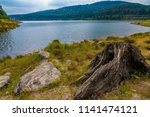 old  dry trunk near a sea   dam ... | Shutterstock . vector #1141474121