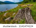 old  dry trunk near a sea   dam ... | Shutterstock . vector #1141474124