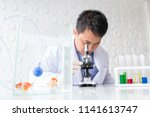 asian doctor diagnose fish with ... | Shutterstock . vector #1141613747