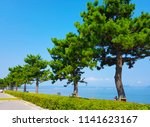 rows of big high pine trees... | Shutterstock . vector #1141623167