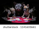 Stock photo french bulldogs playing cards 1141633661