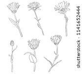 vector set of drawing calendula ...   Shutterstock .eps vector #1141652444