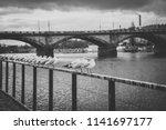 many white seagulls standing on ... | Shutterstock . vector #1141697177