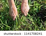 the farmer weeds the garden and ... | Shutterstock . vector #1141708241