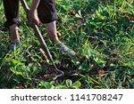the farmer weeds the garden and ... | Shutterstock . vector #1141708247