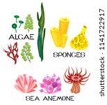 set of different species of sea ... | Shutterstock .eps vector #1141722917
