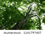 flowers  trees and insects | Shutterstock . vector #1141797407