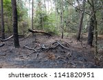 burned piece of forest in the... | Shutterstock . vector #1141820951