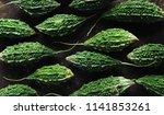 wild bitter gourd  bitter... | Shutterstock . vector #1141853261
