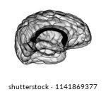 x ray human brain 3d render | Shutterstock . vector #1141869377
