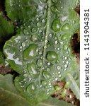 the frozen rain drops. the...   Shutterstock . vector #1141904381