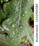 the frozen rain drops. the...   Shutterstock . vector #1141904384